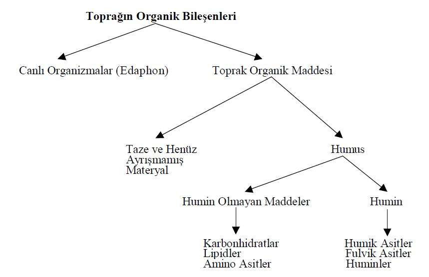Toprağın organik bileşenleri