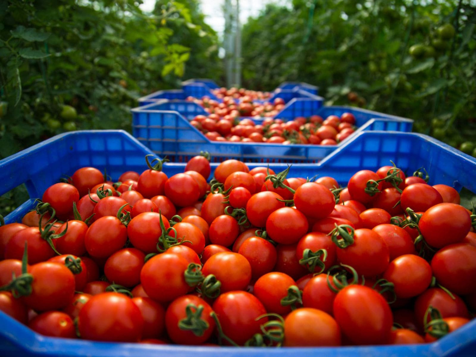Küresel açlıkla mücadele etmek için yeniliği teşvik etmemiz, pazar verimsizliklerini azaltmamız ve hayati genetik kaynakları korumamız gerekiyor.