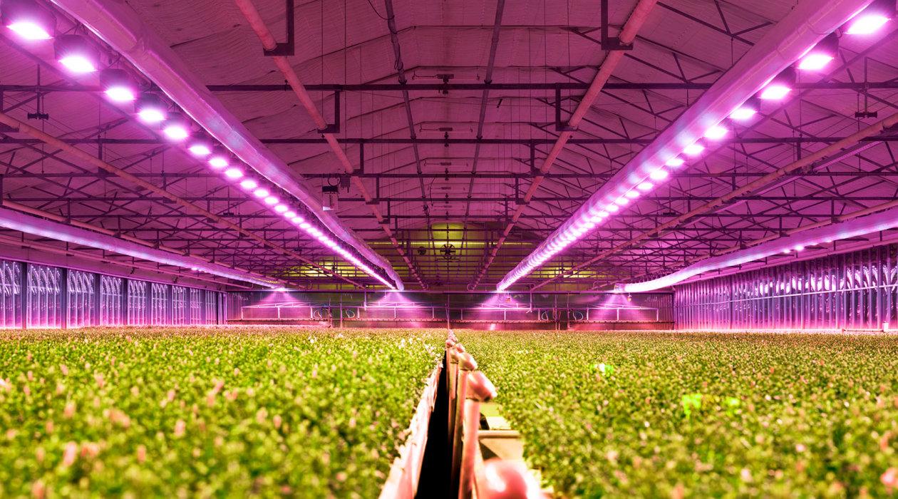 Gelişen teknolojiye paralel olarak, dünyadaki tarımsal üretimde de Led aydınlatmalara geçiş hızlanarak devam ediyor.