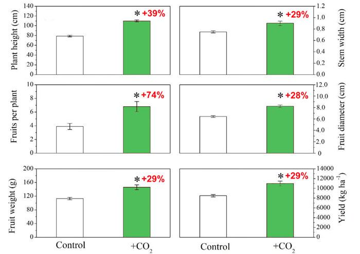 Tarımsal organik atıkların fermantasyonu ile CO2 zenginleştirmesinin domatesin farklı büyüme ve verim parametrelerine etkisi. Kırmızı metindeki yüzdeler, kontrol koşullarına göre CO2'ye bağlı artışı gösterir. Hata çubukları standart sapmayı temsil eder ve yıldız işareti (*) p ≤ 0,05'te önemli farkı temsil eder. Kaynak: Hao ve ark. (2020).