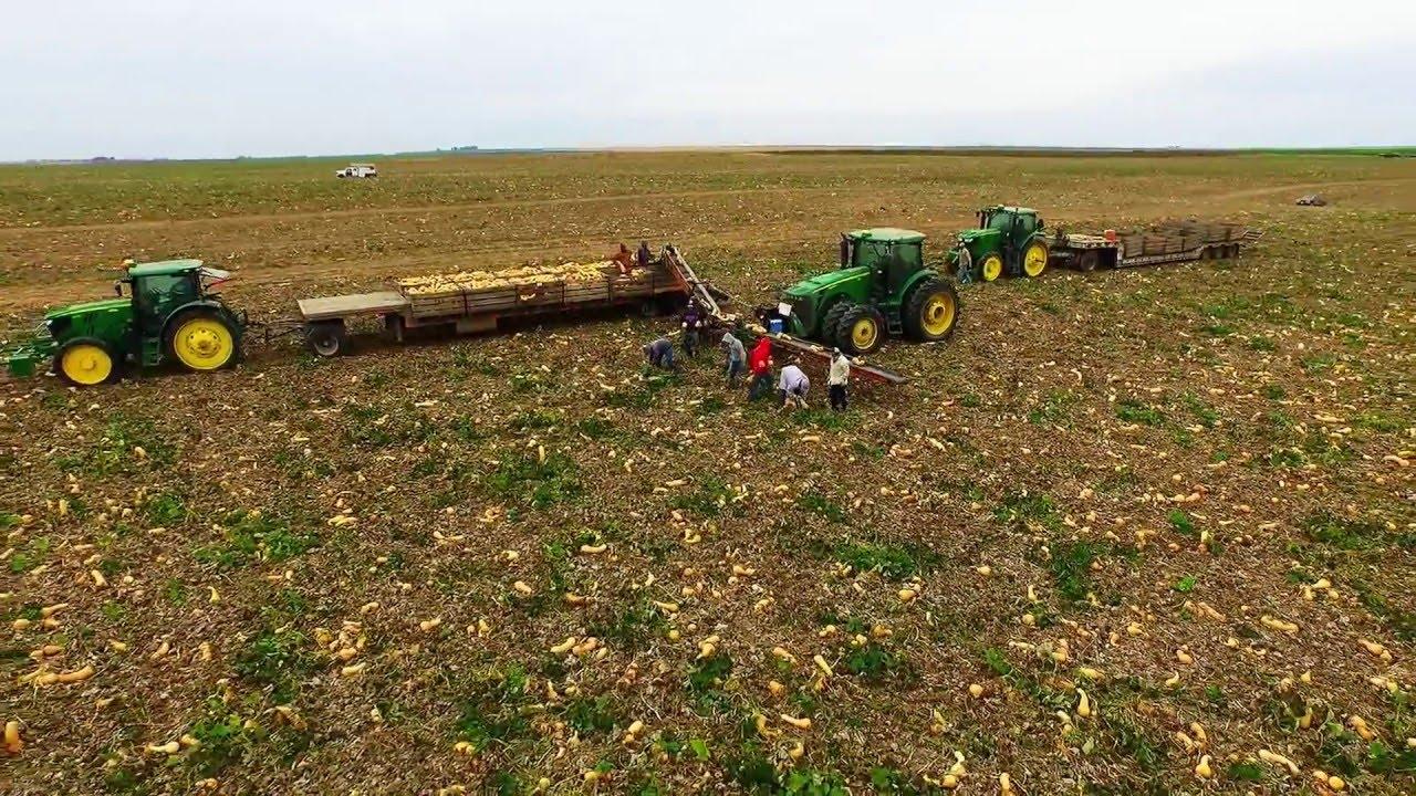Makineli hasat