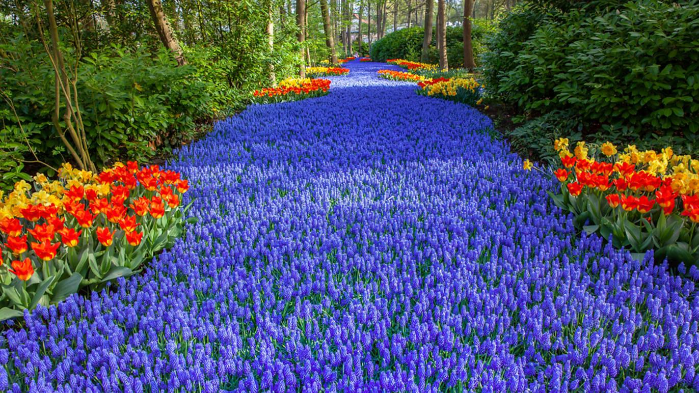 Hollanda'nın simgesi haline gelmiş olan lalelerin merkezi olarak kabul edilen Keukenhof çiçek sergisinin muhteşem videoları ile, gününüze keyif katın.