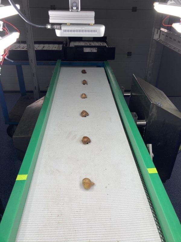 3D kamera, çiçek soğanlarını ölçümlerken