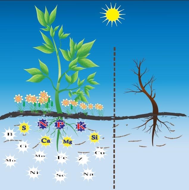 Bitkilerin gelişimleri için ihtiyaç duydukları maddeler
