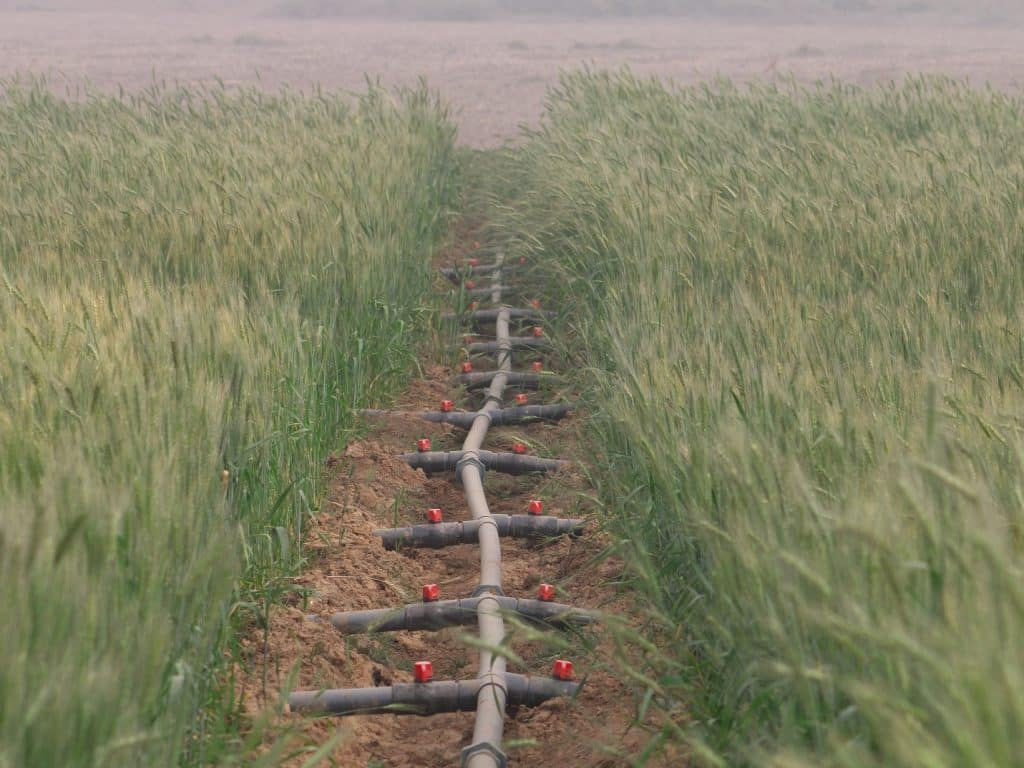 Buğdayda damla sulama