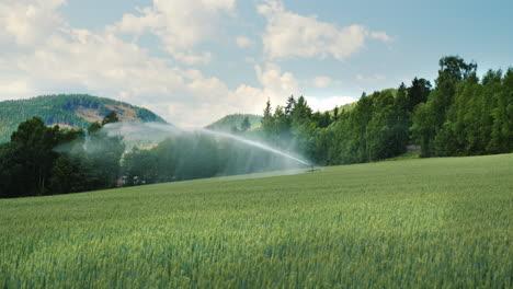 Buğdayda yağmurlama sulama