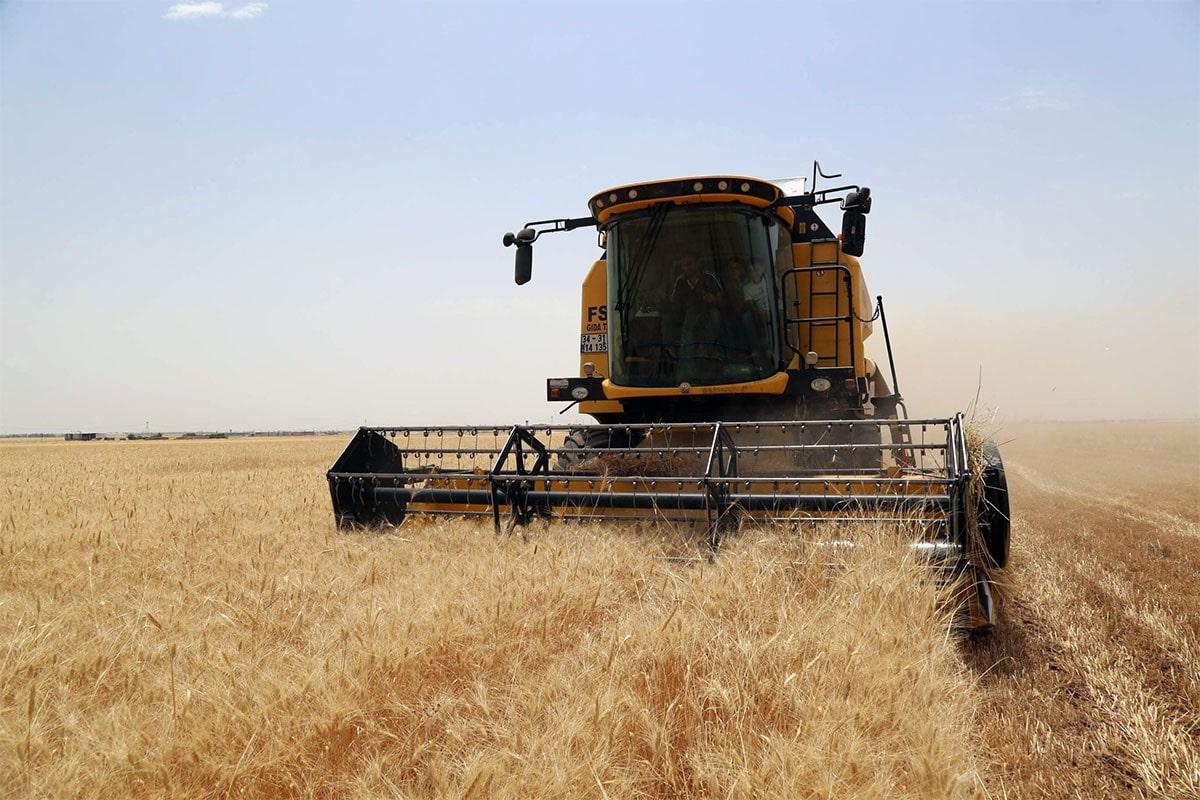 Biçerdöverle yapılan buğday hasatı