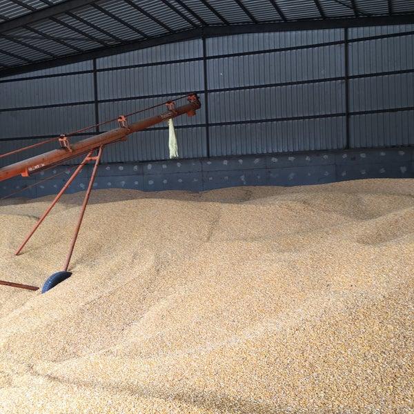 Depolanmış buğday
