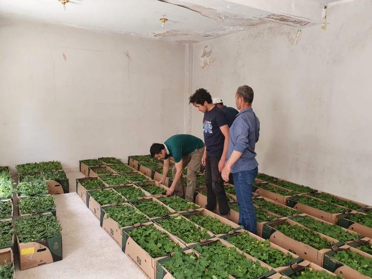 Histhil-Toros fidecilikten Suriye'li çiftçilere anlamlı destek.