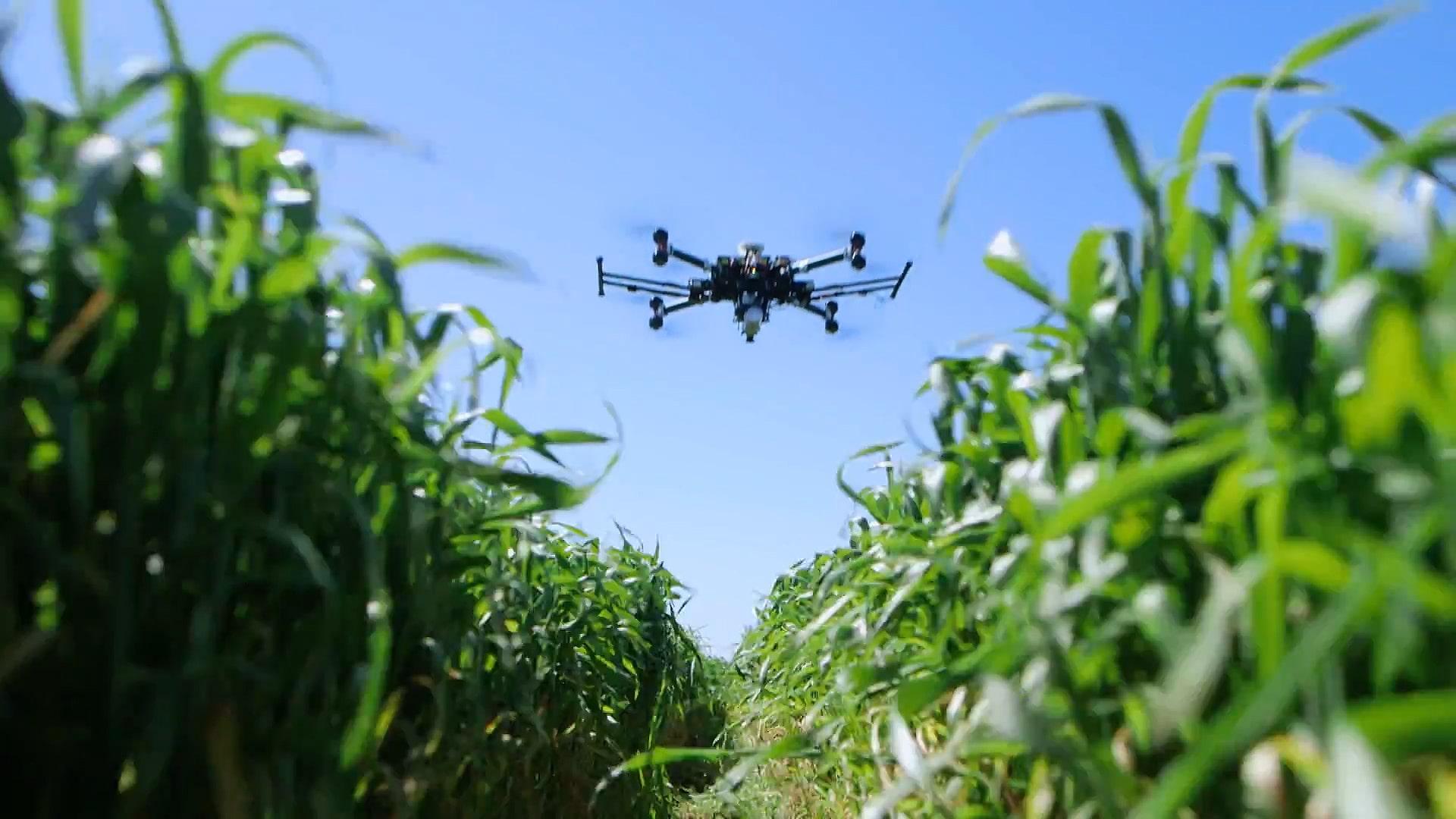 Mahsul kontrolü yapan bir dron