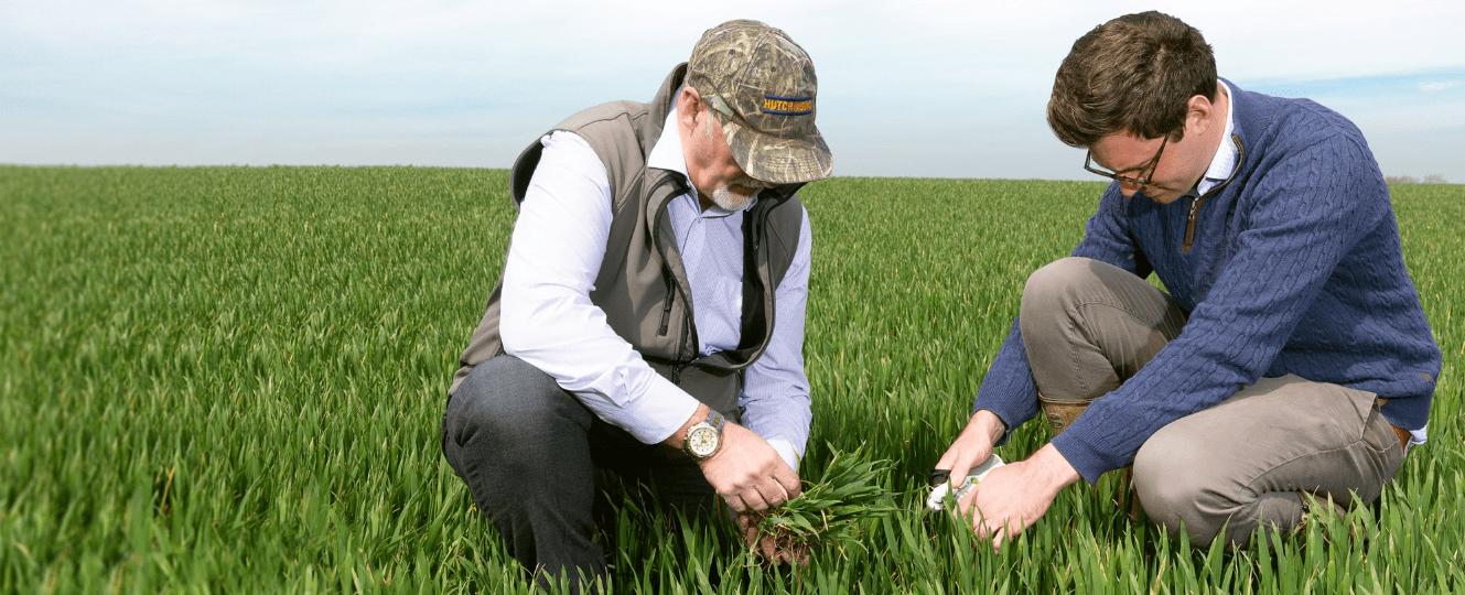 Tarım endüstrisinde agronomistlere olan talep her geçen gün artmaktadır. Çiftçilerin riskini en aza indirirken, karlı ürünler üretmek her yıl daha da zorlaşıyor.