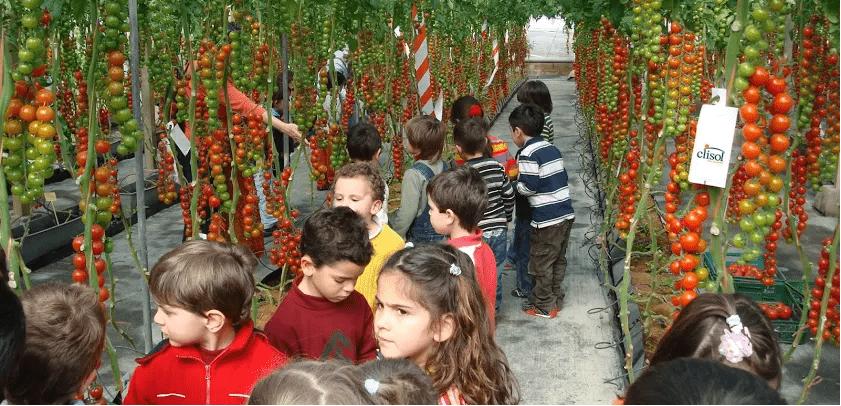 İspanya'nın Almeria bölgesinde bulunan seralar, rehberler eşliğinde yerli ve yabancı turistleri ağırlıyor.