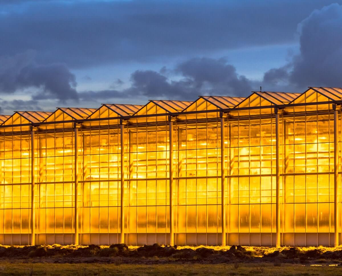 Kontrollü tarım olarak adlandırılan, sera yetiştiriciliğinden dikey tarıma kadar olan yetiştiricilik modelleri, iklim değişikliğinden kaynaklı tarımdaki verim azalışlarının çözümü olarak görülüyor.