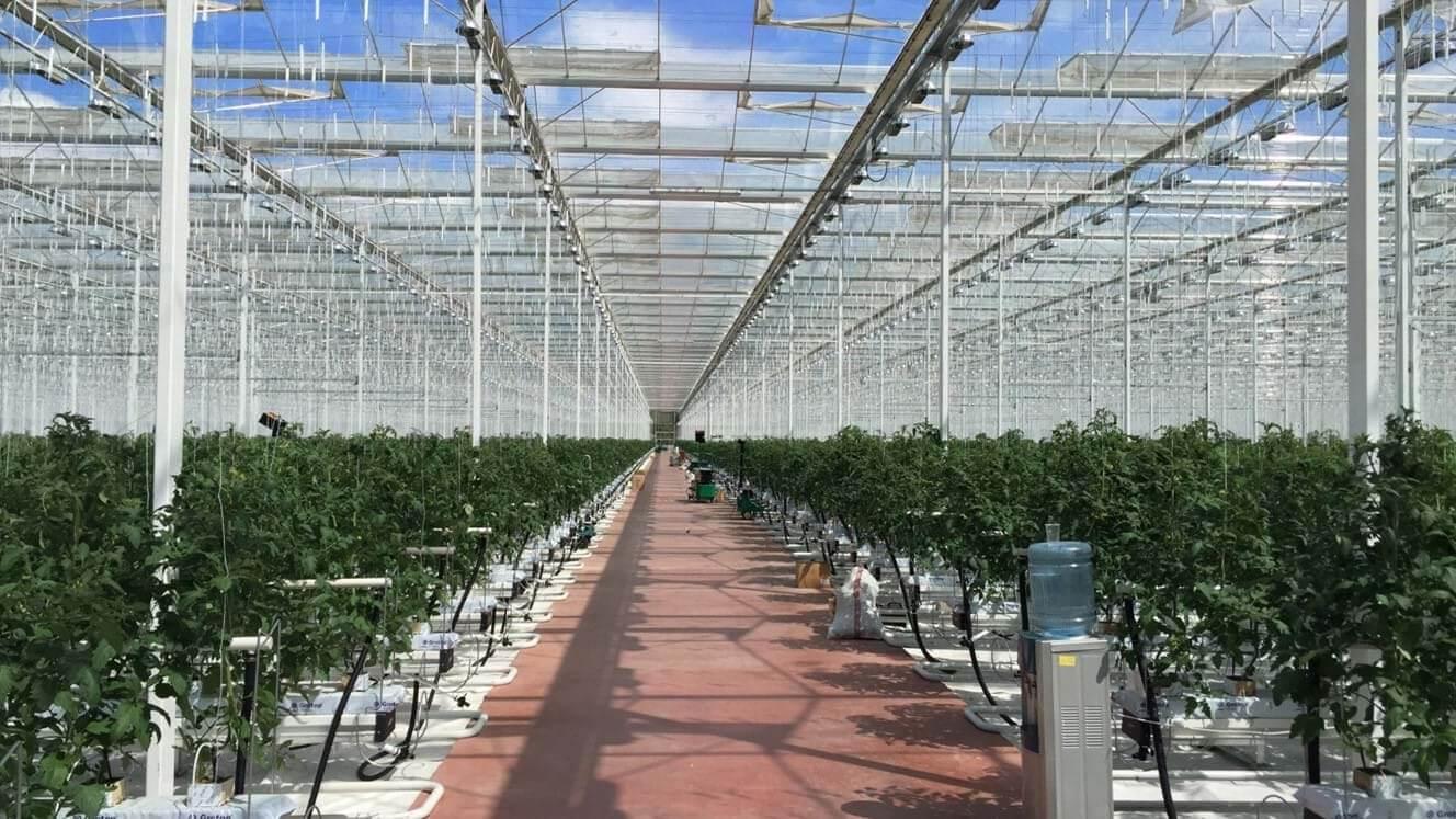 Rusya'da bitkisel üretimin yapıldığı 14 farklı bölgedeki seraları ve üreticileri ziyaret eden Hakan Öztürk, Türkiye'nin Rusya'ya yapacağı sebze ihracatlarında ciddi düşüşler olacağını belirtiyor.
