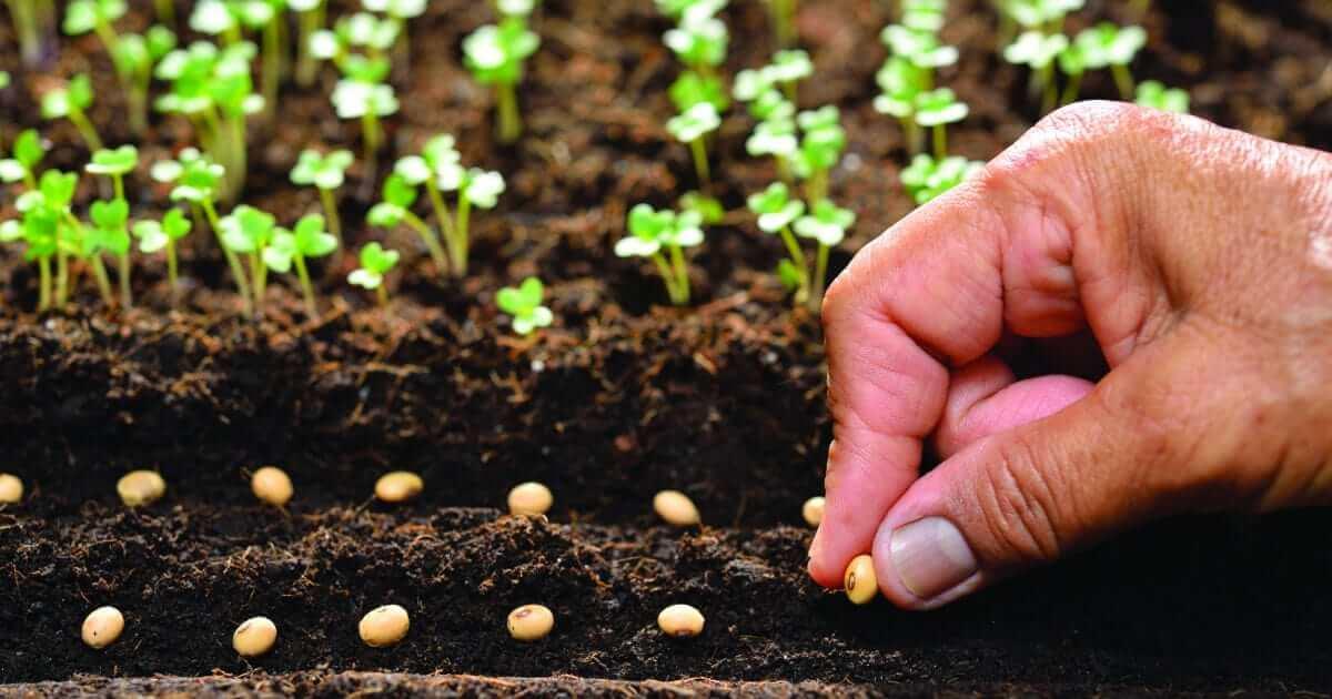 Tarım ve Orman Bakanlığı'nın hazırladığı Yerel Çeşitlerin Kayıt Altına Alınması, Üretilmesi ve Pazarlamasına Dair Yönetmelik, 3 Eylül 2019 tarihli Resmi Gazete'de yayımlanarak yürürlüğe girdi.