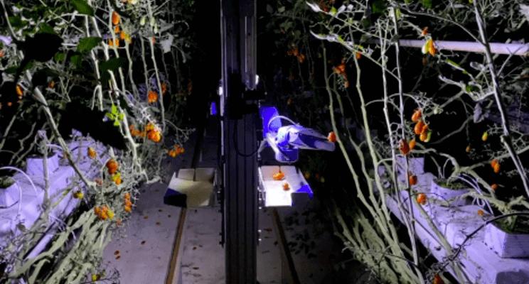 Merkezi Kanagawa, Japonya'da bulunan Inaho Inc.; Hollanda'da, Inaho Europe B.V. nin kuruluşunu duyurarak en son ürünleri olan domates hasat robotunu tanıttı.