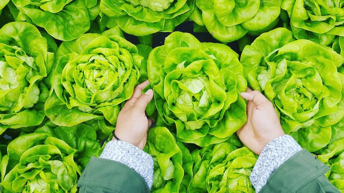Birleşmiş Milletler Gıda ve Tarım Örgütü (FAO)verilene göre, 2019 yılında dünya marul üretimi 29.134,65 milyon kilo olarak gerçekleşti.