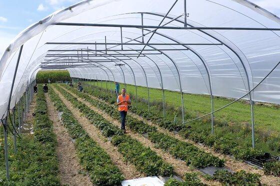 Geliştirilen yapay zekanın dronelara uyarlanması ile; yetiştirilmekte olan çileklerin meyve ve çiçeklerinin sayımı yapılarak, üreticilerin doğru hasat tahminleri yapılabilmeleri sağlanmaktadır.