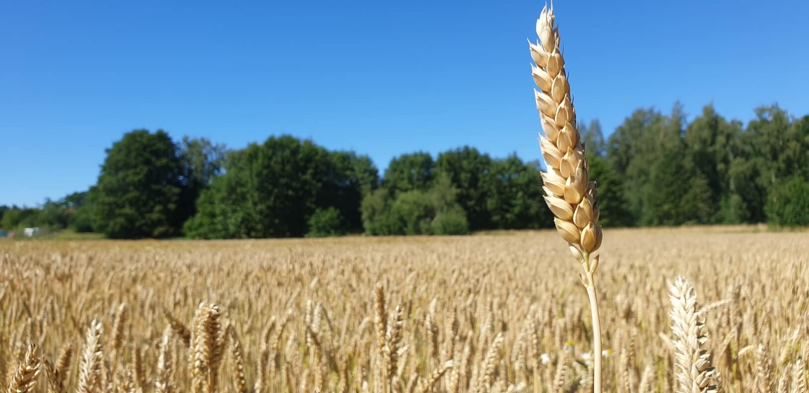 Son yıllarda dünyada yaşanan iklimsel değişim, tarımsal verimliliği olumsuz yönde etkilemeye devam ederken ülkemiz tarımını da ciddi anlamda tehdit ediyor.