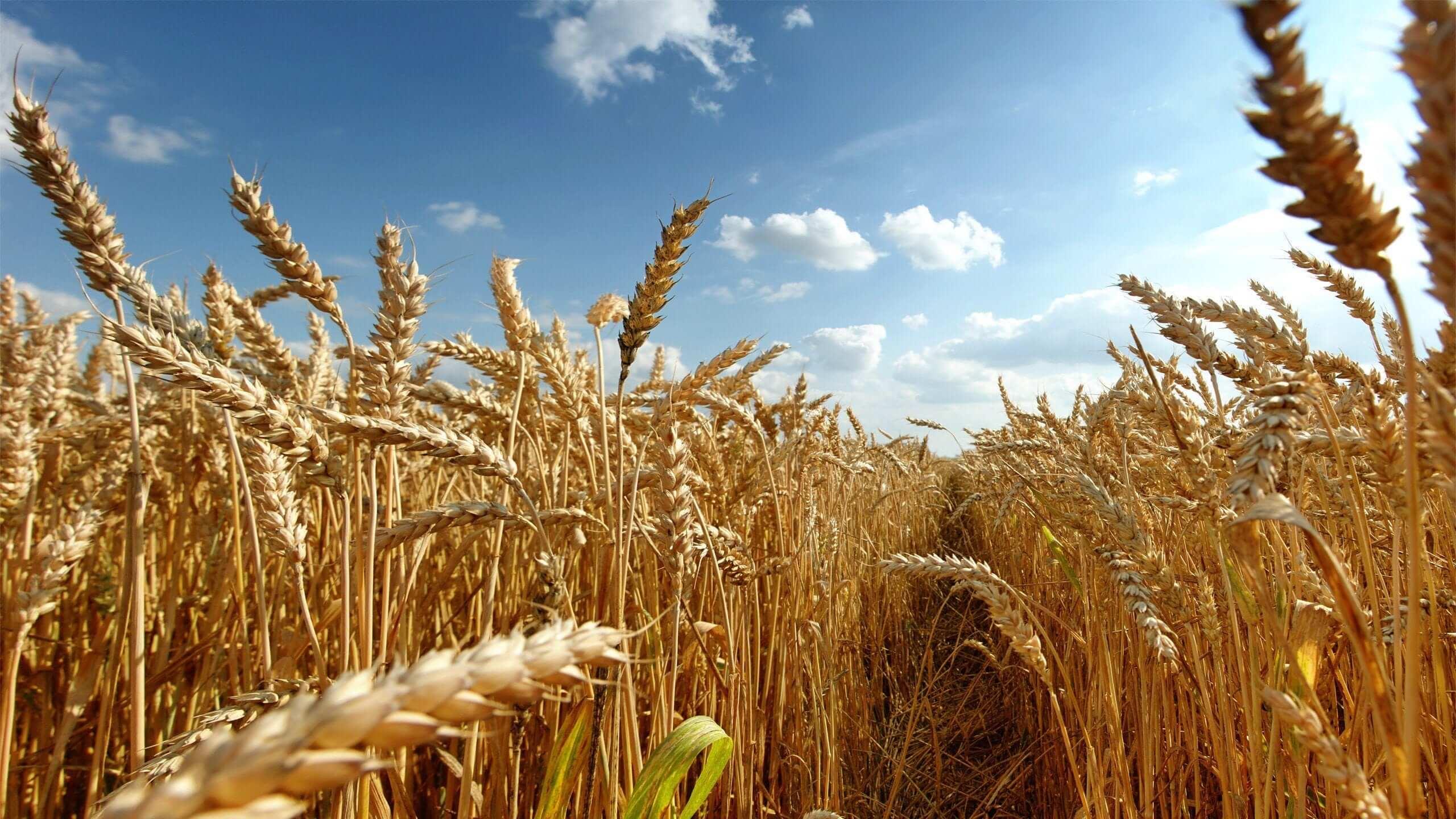 Konum itibariyle uygun iklim ve coğrafi koşullara sahip olan Türkiye; tarımda dünya üzerinde önde gelen ülkelerden biri olarak kabul edilmektedir.