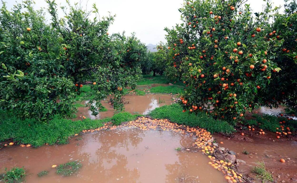 2 hafta önce Valensiya'nın özellikle kıyı bölgelerinde kaydedilen şiddetli yağışlar, tarımsal alanlarda 62 milyon € luk kayba neden oldu.