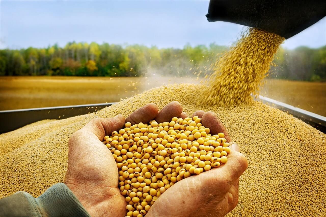 Zengin oranda besin maddeleri içeren soya tohumları, itibariyle beslenme ve endüstride önemli bir yeri olduğundan birçok ülkede yetiştirilmektedir.