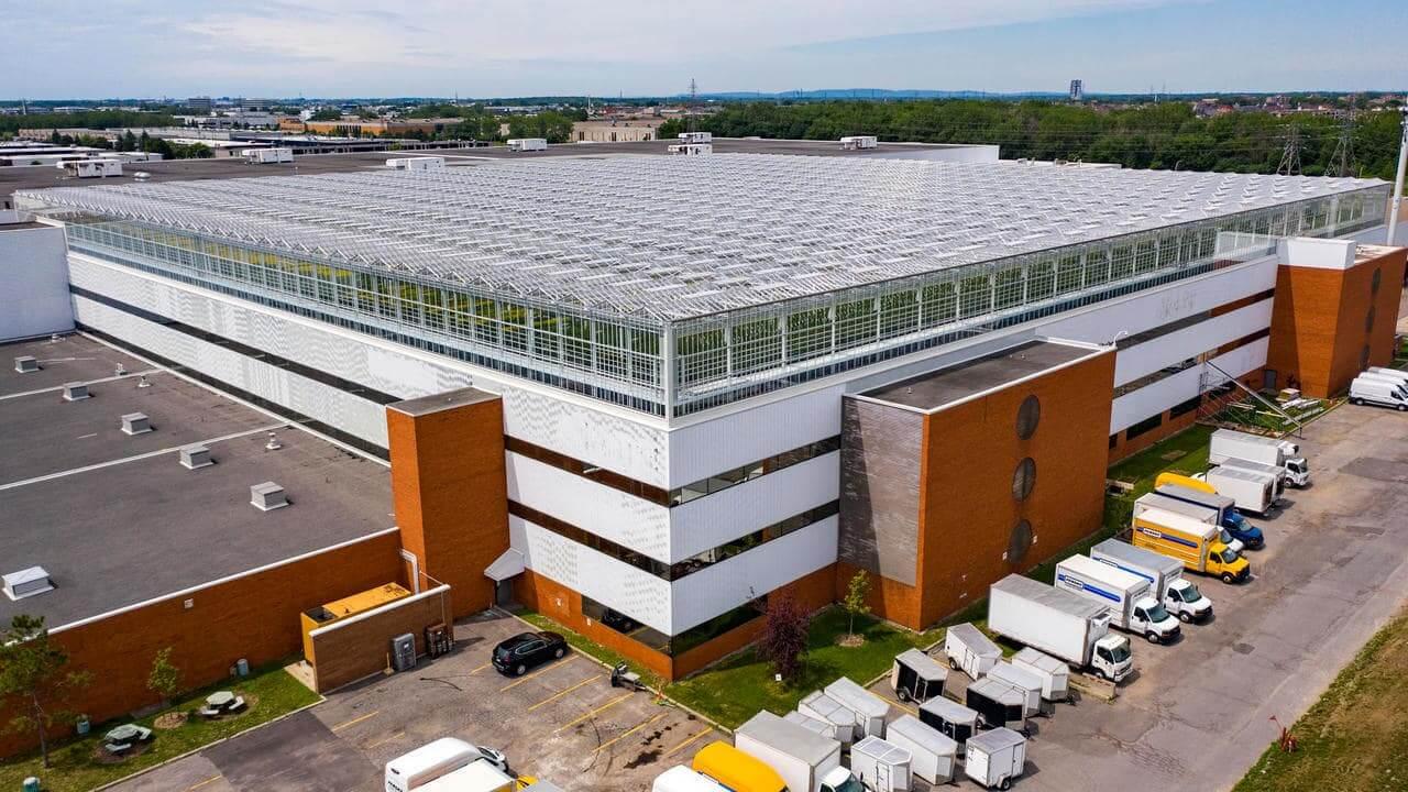 Montreal'de bir deponun çatı katında üretim yapan bu sera, haftalık 20.000 ailenin domates ve patlıcan ihtiyacını karşılayabilmektedir.