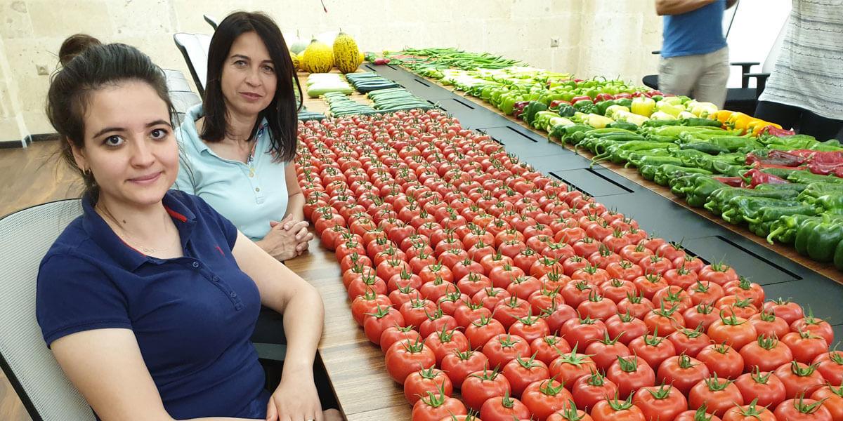 AD-Rossen yeni dönem için domates tohumuyla alakalı ARGE çalışmalarına devam ediyor.