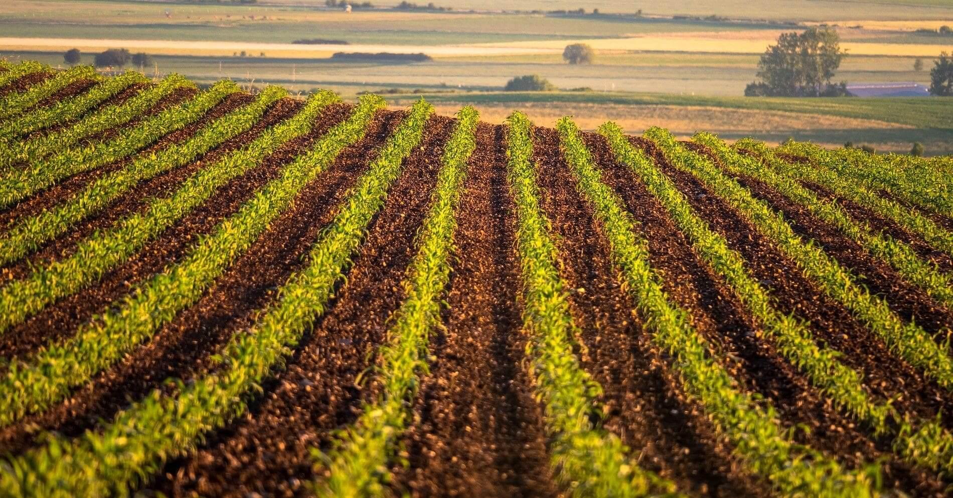 Bitkilerin sürekli ve sağlıklı büyümesi için önemli olan iz elementler, bitkilerde fotosentez, klorofil ve enzim oluşumunda etkilidir.