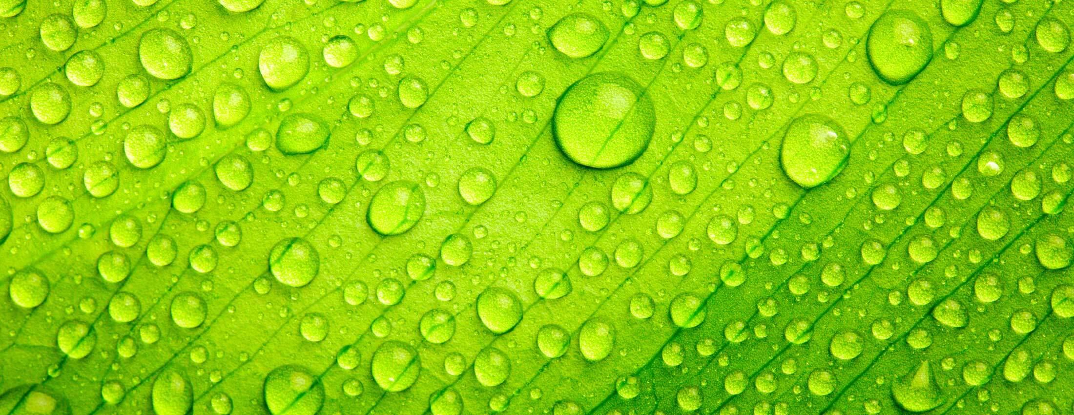 Bir ek gübreleme çeşidi olan yaprak gübreleri, bitki yapraklarına püskürtme yöntemiyle uygulanarak, bitkinin daha fazla su ve besin alımı sağlanır.