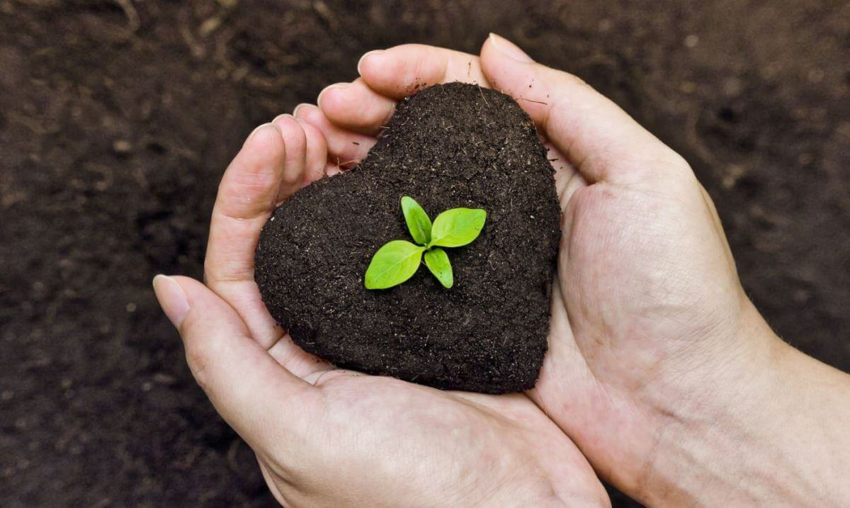 Çevre dostu olan bu gübreler, toprak içinde bulunan ve bitkiler için çok faydalı olan mikroorganizmaları beslerken aynı zamanda toprağın yapısınında iyileşmesini sağlar.
