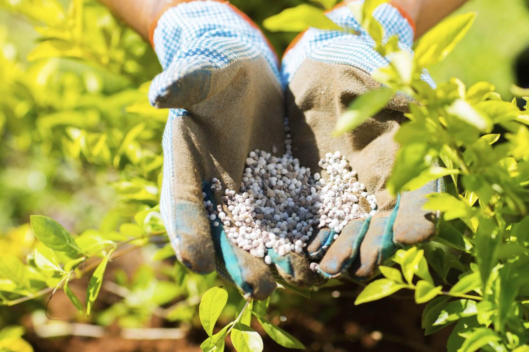 Bitkilerin gelişim süreleri içinde ihtiyaç duydukları besin maddelerinin doğru zaman, miktar ve uygulama ile verilmesi; ürünün verim ve kalitesi açısından çok önemlidir.