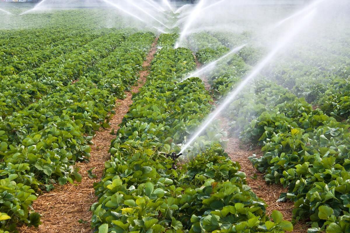 Sulama sırasında toprağa düşen damlaların, yağmura benzemesinden dolayı yağmurlama sulama denilen bu sistemin verim arttırıcı bir çok avantajı vardır.
