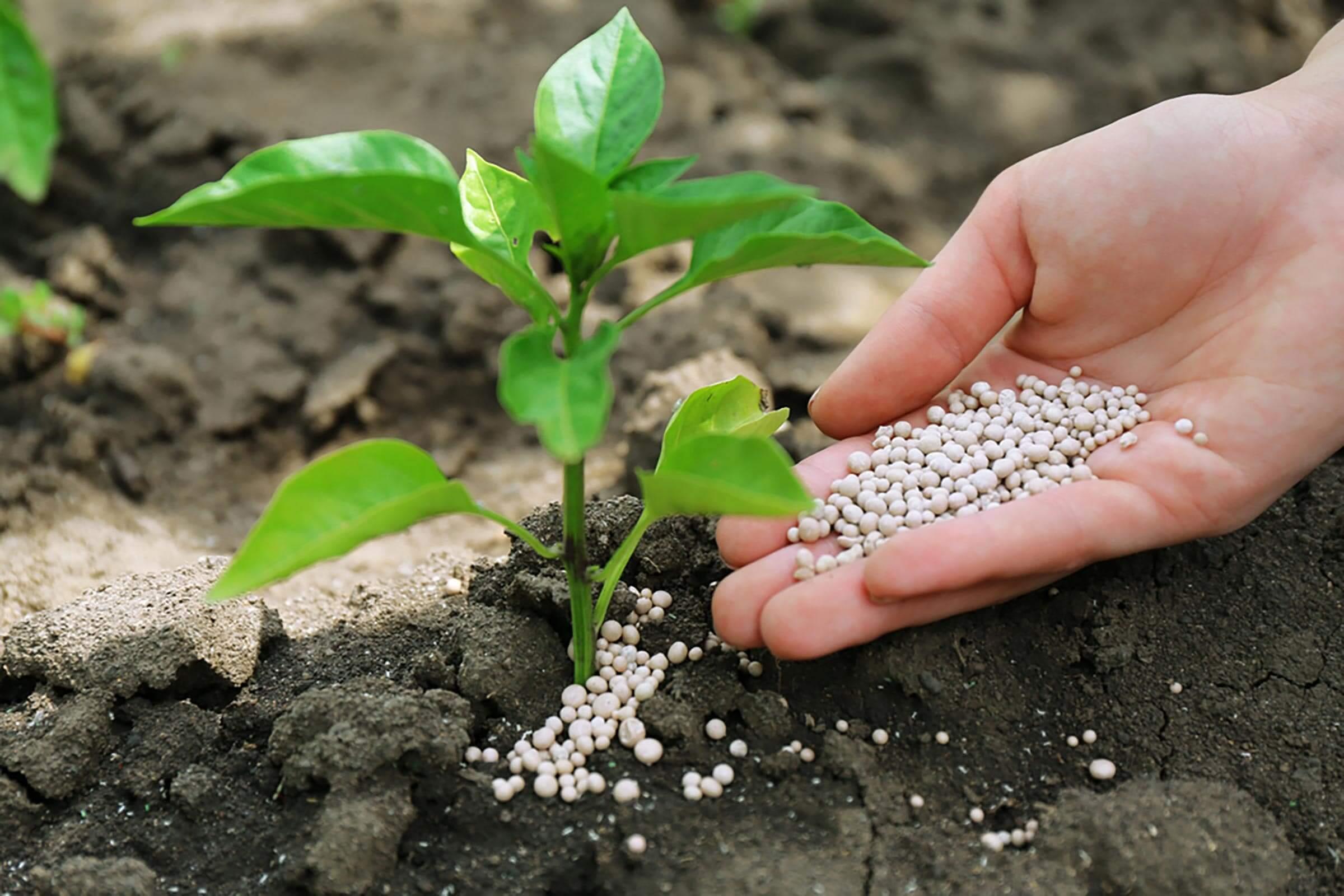 Bitkilerin beslenme ve büyümeleri için gerekli olan besinleri katı ya da sıvı normlarda barındıran maddelere gübre denilir. Gübreleri organik ve inorganik olmak üzere 2 başlık altında toplayabiliriz.