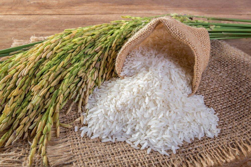 Çeltik ve pirinç
