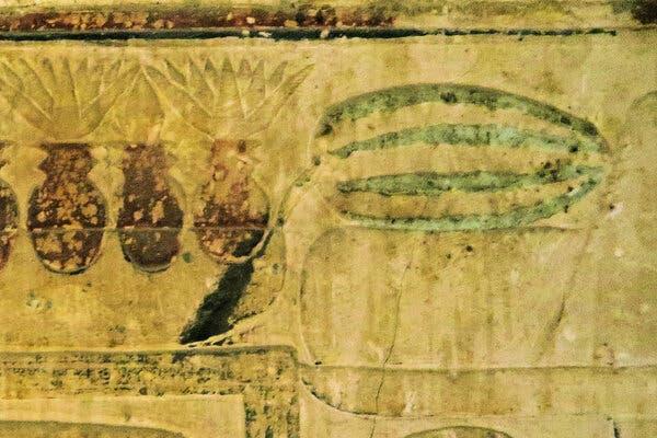 Mısır'da keşfedilen karpuzun çizimi