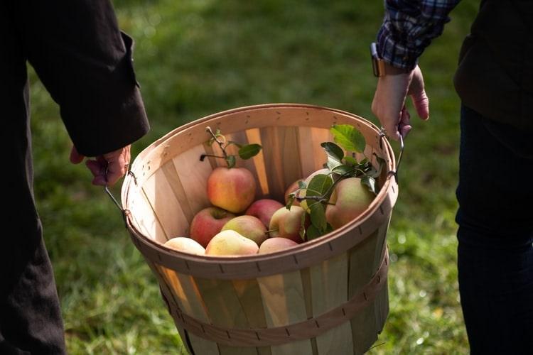 Dünyanın en çok elma ithalatı yapan ülkelerinden olan Vietnam, 2020 yılında elma ithalat hacmini ikiye katladı.