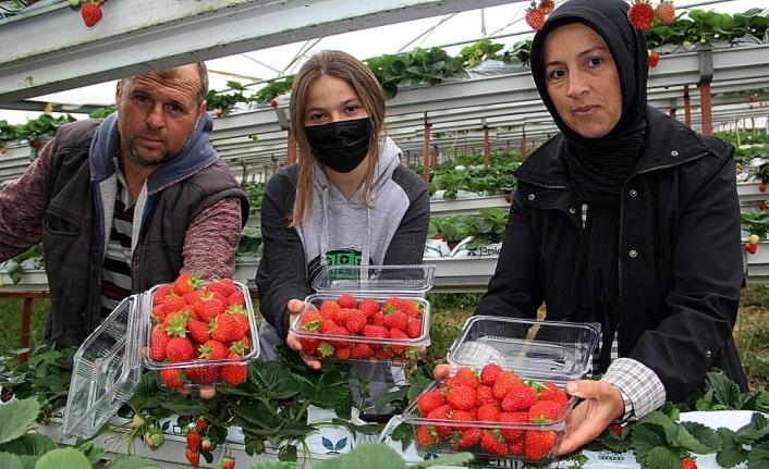 Sinop'ta yılın kadın mikro girişimcisi ödülüne layık görülen Alime Çekirdek, eşiyle 5 yıl önce başladıkları çilek üretimini bugün 3 bin metrekare alana çıkarmayı başardı