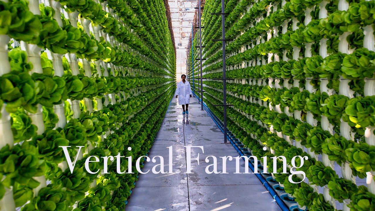 Rus bilim adamları, gıda güvenliğini artırmak için dikey tarım teknolojilerini geliştirmeye çalışıyorlar.