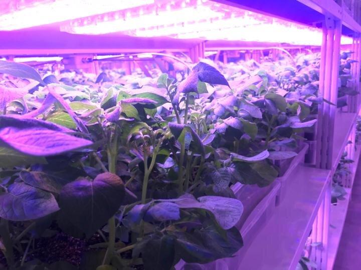 Modül standı, otomatik sulama ve çok kanallı LED aydınlatma sistemlerine sahiptir. - Görüntü, Rusya Bilimler Akademisi Biyoteknoloji Federal Araştırma Merkezi'nin izniyle