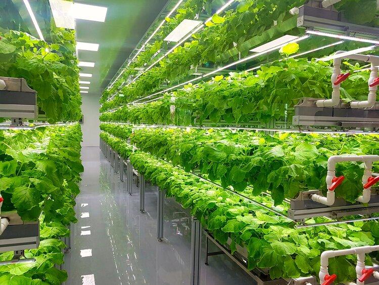 Dikey tarım üretim alanı