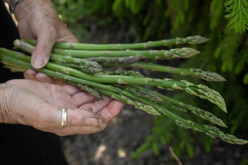 Avrupa Birliği ağaç, asma, patates ve diğer türlerde uyguladığı bitki ıslahçı hakları çeşit koruma sürelerini arttıran düzenlemeyi kabul etti.