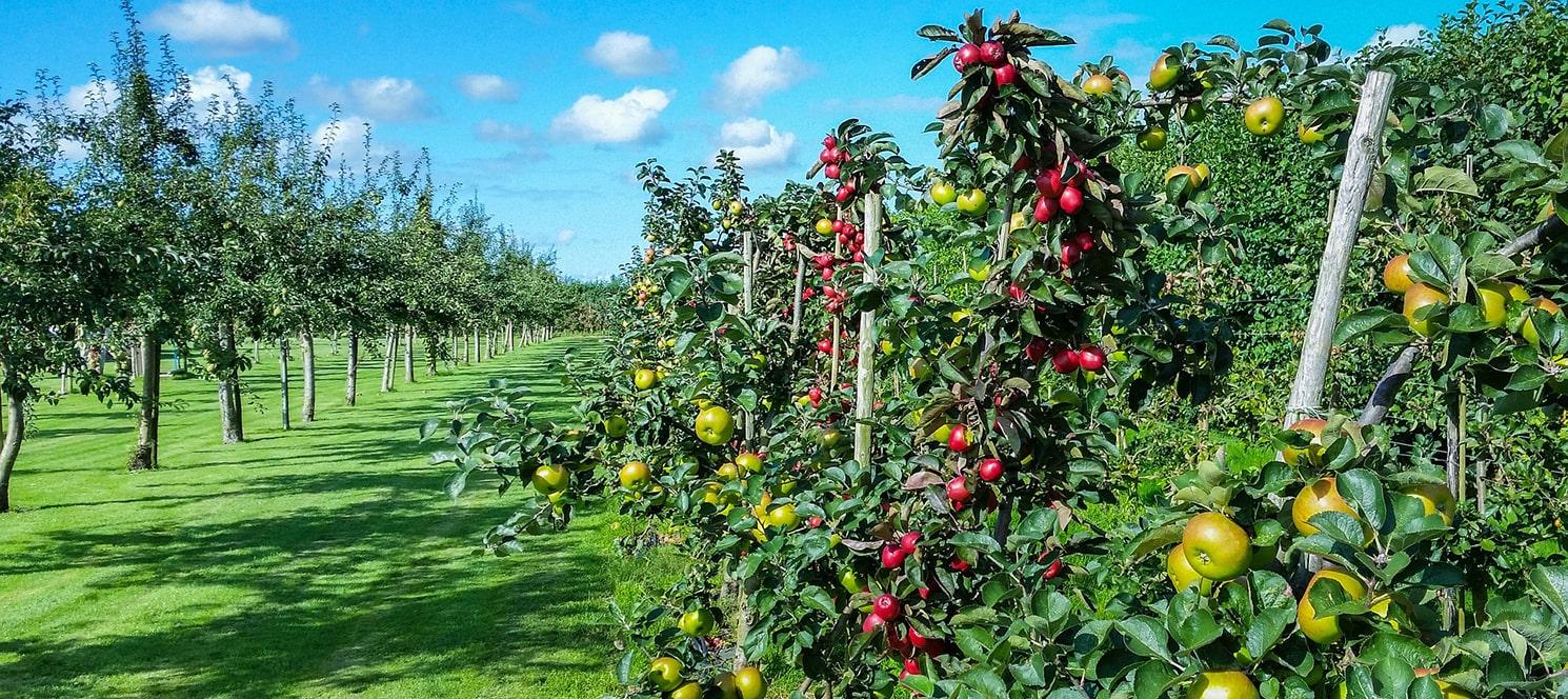 Meyve bahçelerinin kurulumunda kullanılan telli terbiye sistemlerinin, eski sistemlere göre daha ekonomik olup; işçilik maliyetleri ve kurulum süreleri ise daha azdır.