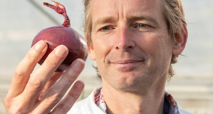 Wageningen Üniversitesi araştırmacıları soğan genomunu çözdüler.