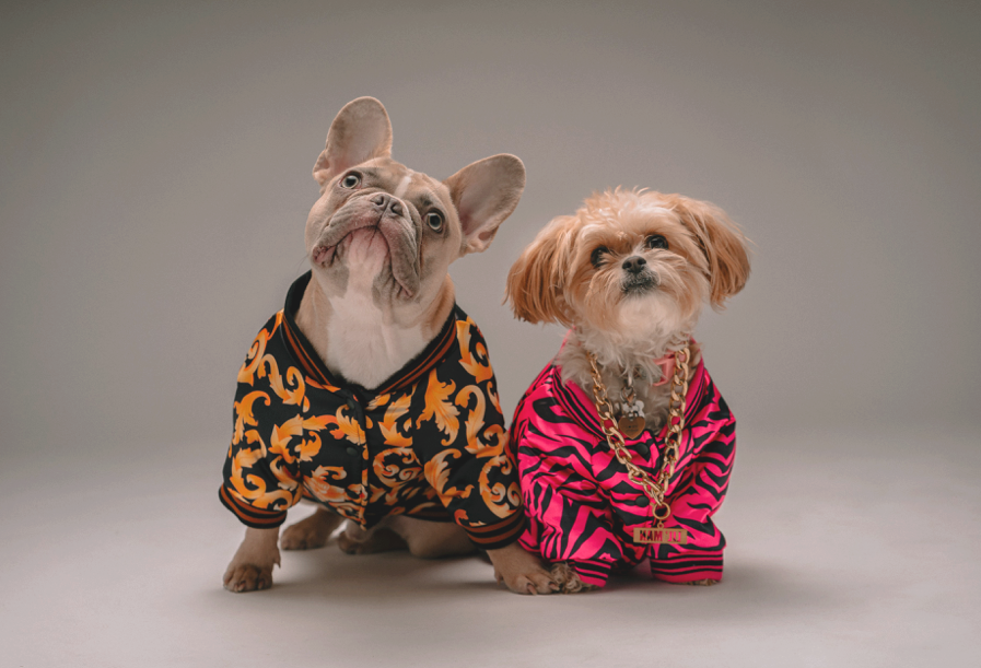 Two small dogs dressed up in clothes inherited from owners