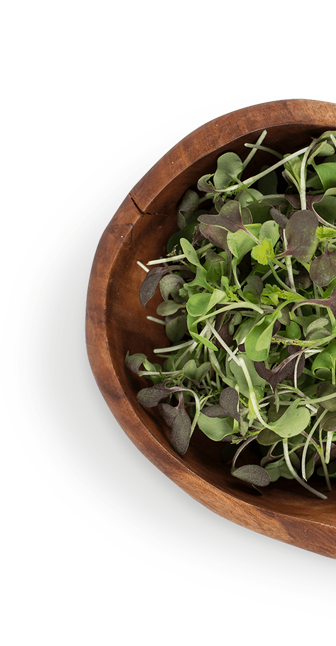 wooden bowl with micro greens
