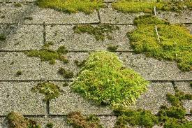 roof repair - algae on shingles