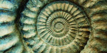 details of a spiral shell