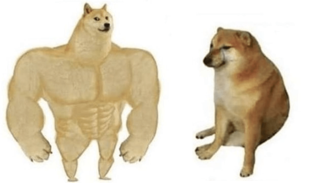 Meme perros shiba inu