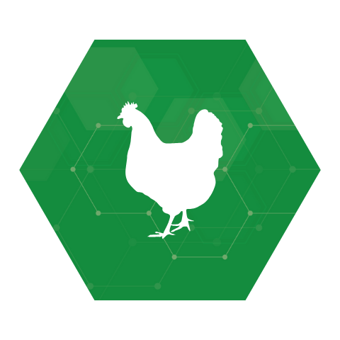 Commercial Poultry
